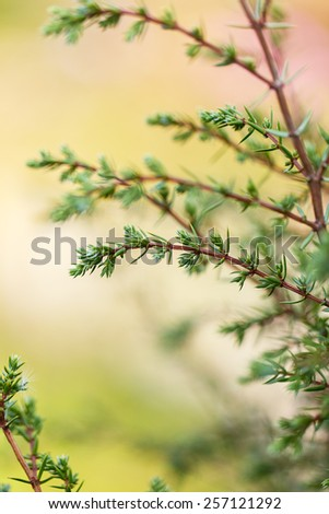 plant bud outside day green background bokeh - stock photo