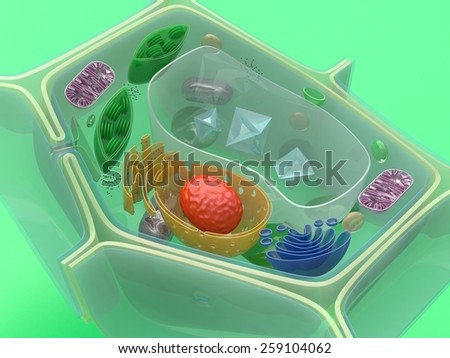 Plant cell - stock photo