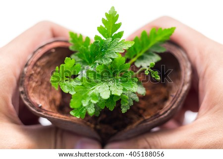Plant decoration nature love concept on white background - soft focus