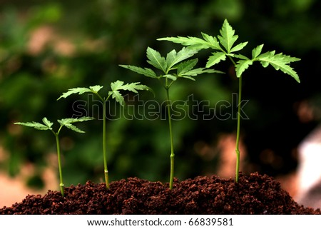Plant evolution -New life - stock photo
