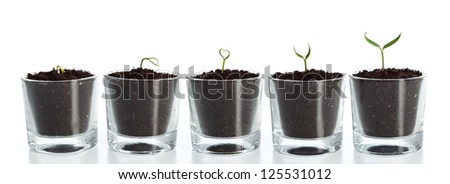 Plant evolution - seedlings growing in small glasses, isolated - stock photo
