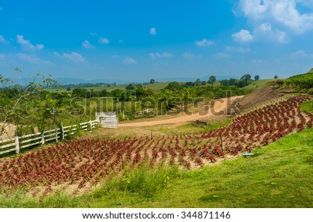 Plant field and farm / Landscape