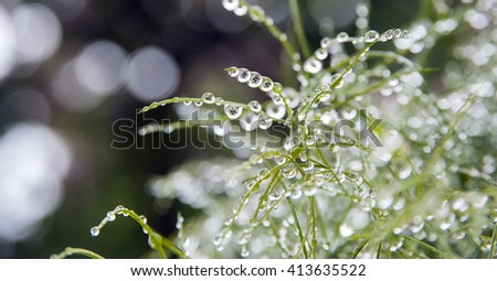 plant full of rain drops in garden. wonderful macro photography with green plant after rain - stock photo