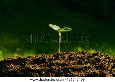 plant germinate from the ground