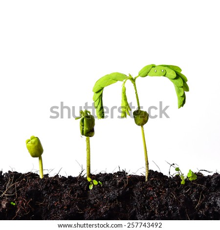 Plant germination and growth - love nature concept ,(Business growth and new life concept) - stock photo
