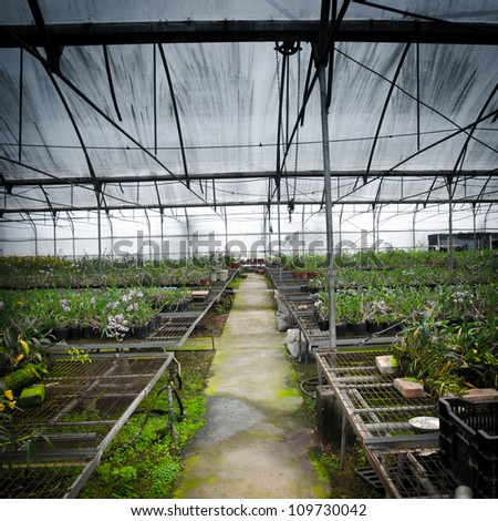 plant green house orchid flower nursery - stock photo