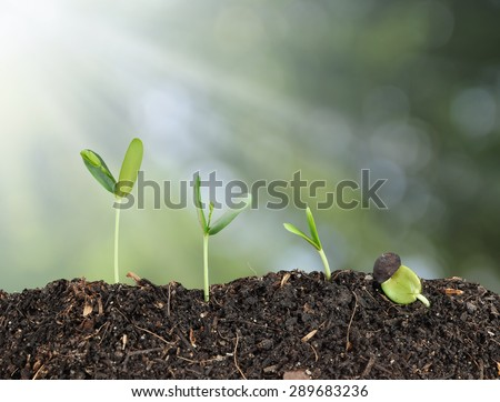 Plant grow and bokeh background , growth concept - stock photo