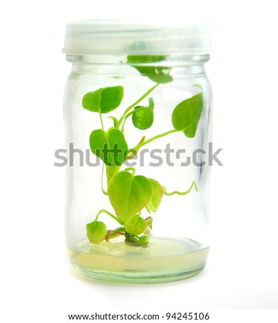 Plant grow in bottle - stock photo