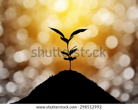 Plant grow silhouette  and bokeh background , concept  - stock photo