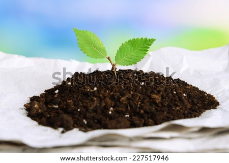 Plant growing from paper on table on bright background