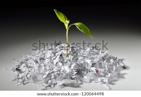 Plant growing from recycled shredded paper