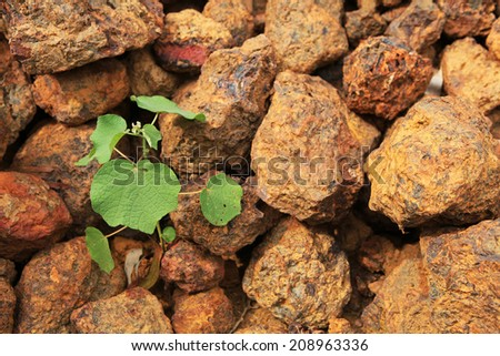 Plant growing from soil and rocky background, new life start from cruel condition - stock photo