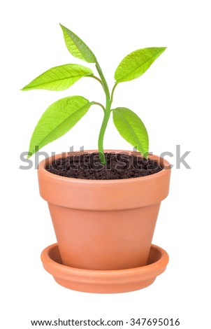 plant growing in a pot on a white background