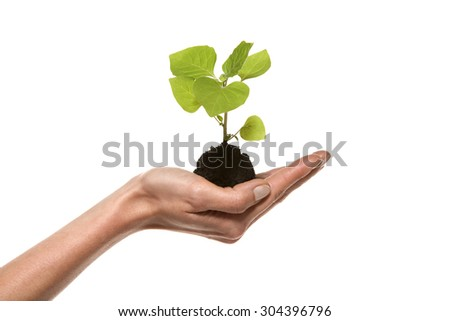 Plant growing in hand - isolated on white - Side view - stock photo
