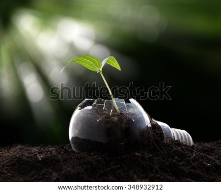 Plant growing in light bulb , ecology ,business concept - stock photo
