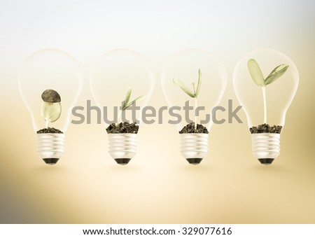 Plant growing in lightbulb , ecology ideas growth concept - stock photo