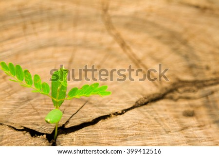 Plant growing on wood,Young plant growing on stump