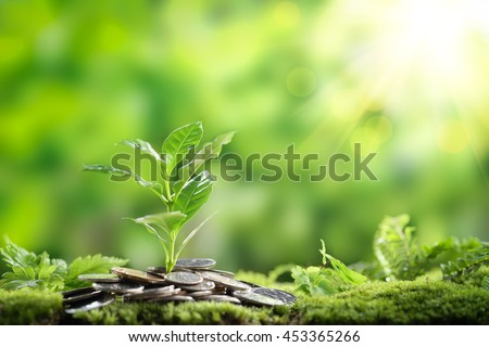 Plant growing out of coins,Closeup. - stock photo