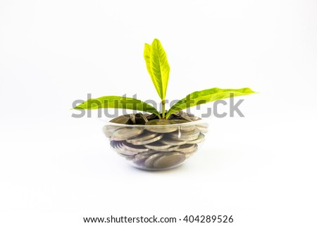 plant growing out of  coins isolated on white - stock photo