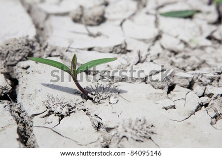 plant growing out of cracks in the earth - stock photo