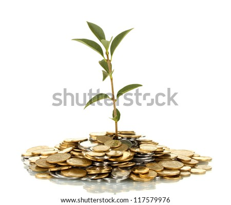 plant growing out of gold and silver  coins isolated on white background close-up