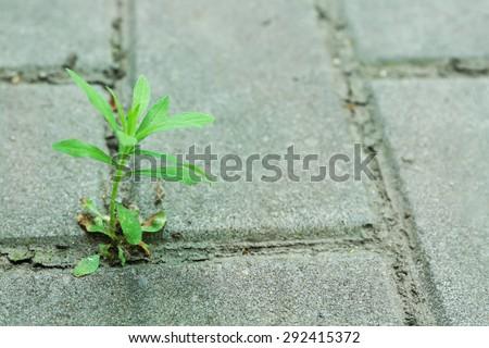 Plant growing through pavement - stock photo