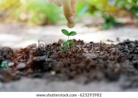 Plant Growing with Savings Coins.  Investment And Interest Concept