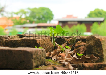 plant grows in old brick wall