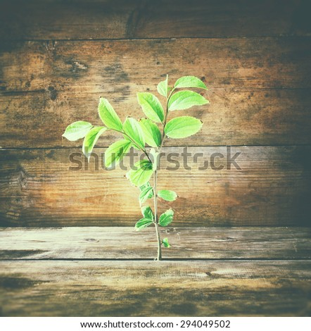 plant grows in old wood crack and symbolizes renewal and freshness. - stock photo
