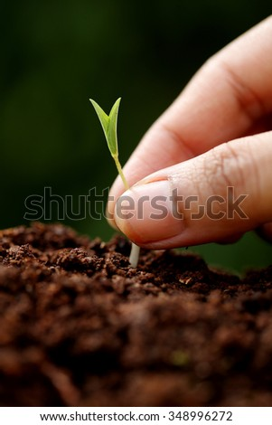 Plant growth-New beginnings - stock photo