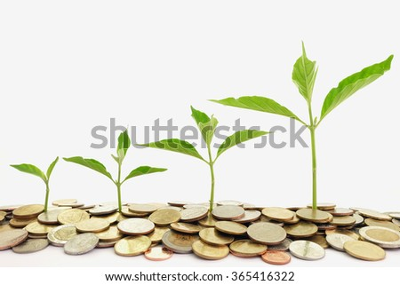 plant growth on the pile of coin in business conception