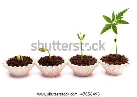 Plant growth-Stages of the plant development - stock photo