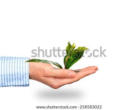 Plant in a hand isolated over white background. - stock photo