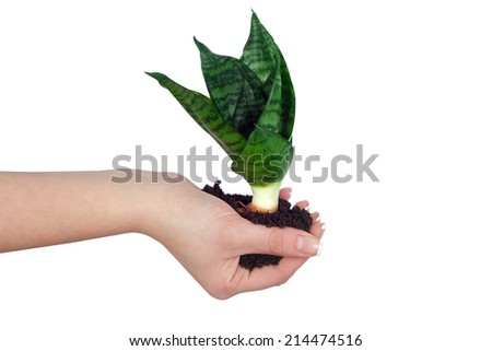 plant in a hand on a white background isolated