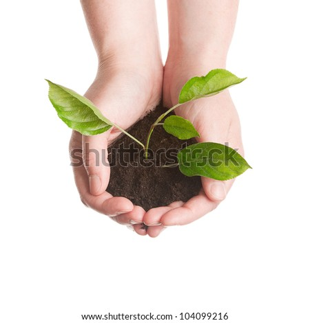Plant in a hands isolated on white background - stock photo
