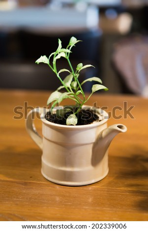 plant in a kettle. - stock photo