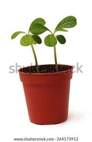 Plant in a pot isolated on white background - stock photo