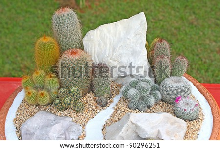 plant in a terracotta pot - stock photo