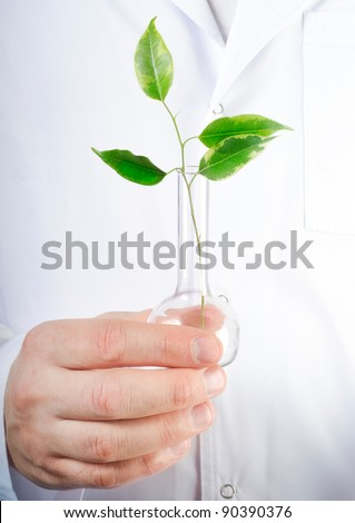 Plant in a test tube in hands of the scientist - stock photo