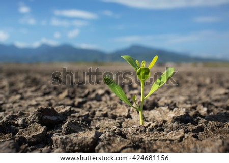 Plant in dried cracked mud,mountain and sky on background - stock photo