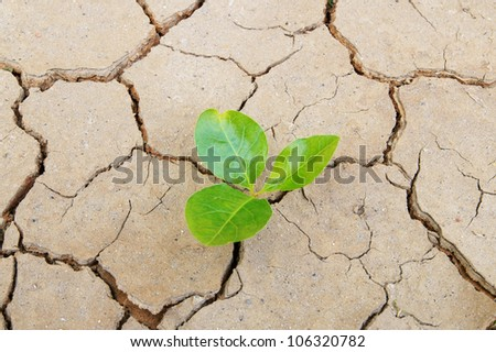 Plant in dried cracked soil