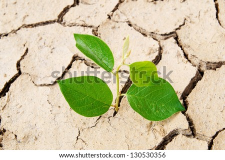 Plant in dried cracked soil - stock photo