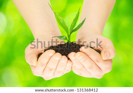 plant in female hands on green background - stock photo