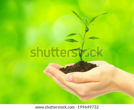 plant in female hands on green background