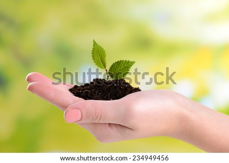 Plant in hand on bright background - stock photo