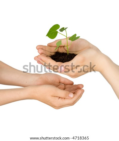 Plant in hands on a white background - stock photo