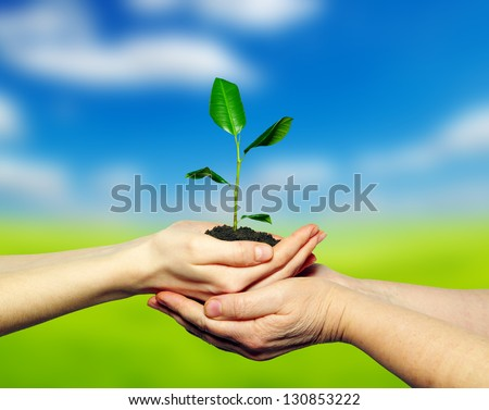 plant in hands on  field background - stock photo