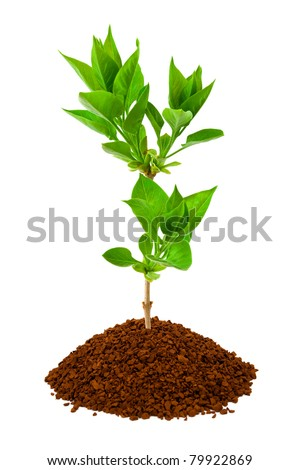 Plant in land isolated on white background - stock photo