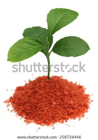 Plant in Muriate of potash fertilizer over white background - stock photo