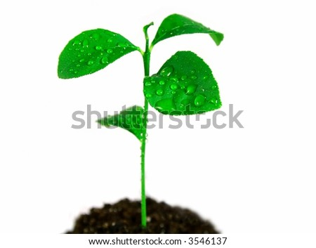 Plant in soil on white background - stock photo